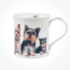 Wessex Designer Dogs Yorkshire Terriers