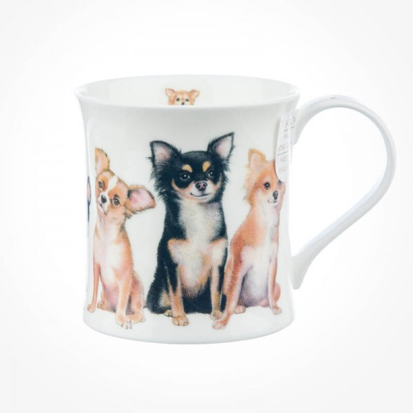 Wessex Designer Dogs Chihuahuas
