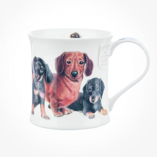 Wessex Designer Dogs Dachshunds