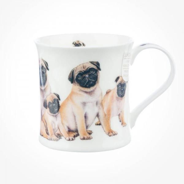 Wessex Designer Dogs Pugs