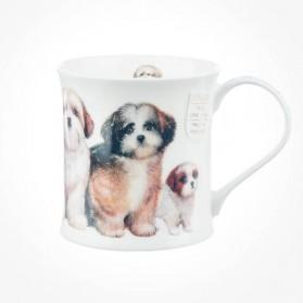 Wessex Designer Dogs Shih Tzus