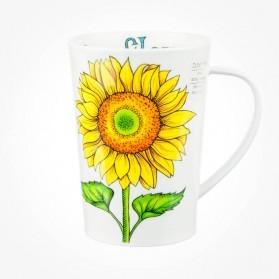 Dunoon Argyll Sunflower