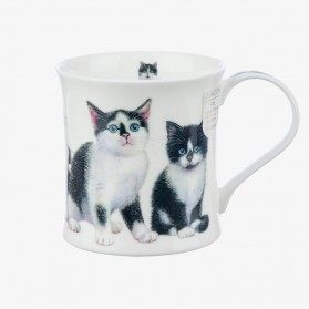 Dunoon Wessex Kittens Black & White