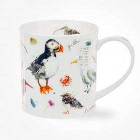 Dunoon Orkney Coastal Birds