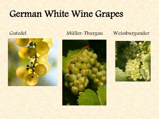 German White Wines – ranked as the Winner of Wines